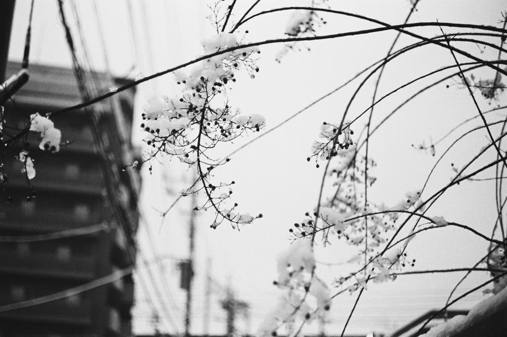 VITESSA試写 #5 -東京積雪-
