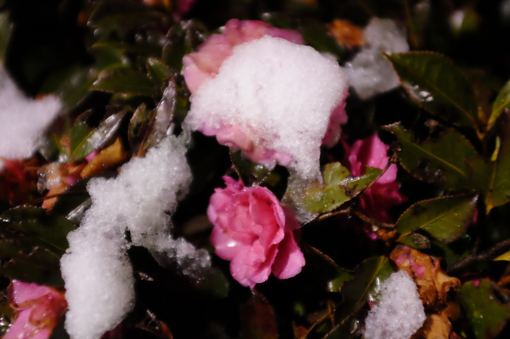 東京積雪 #3