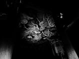 M.ZUIKO DIGITAL ED 12mm F2.0 [ブラック]で撮影した写真