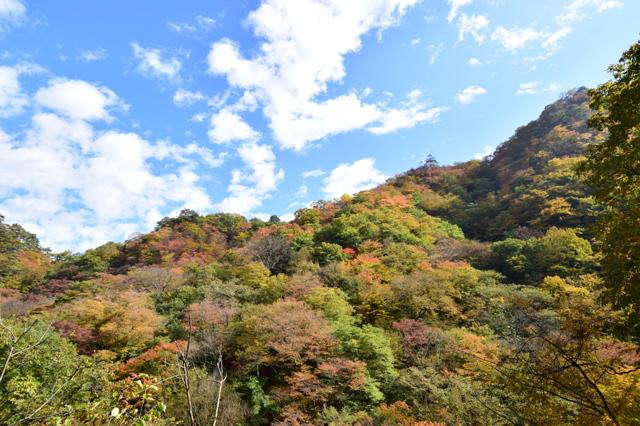 吾妻渓谷の紅葉 その1