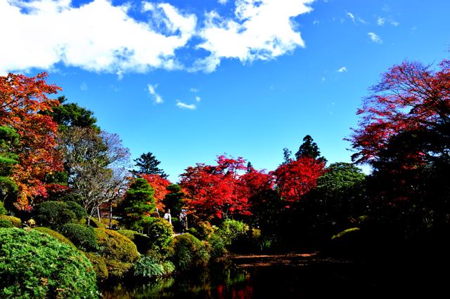 逍遥園の池。