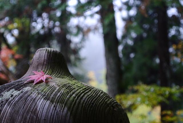 雨の日の紅葉狩り①
