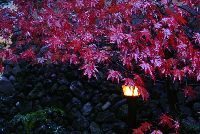 雨の日の紅葉狩り④