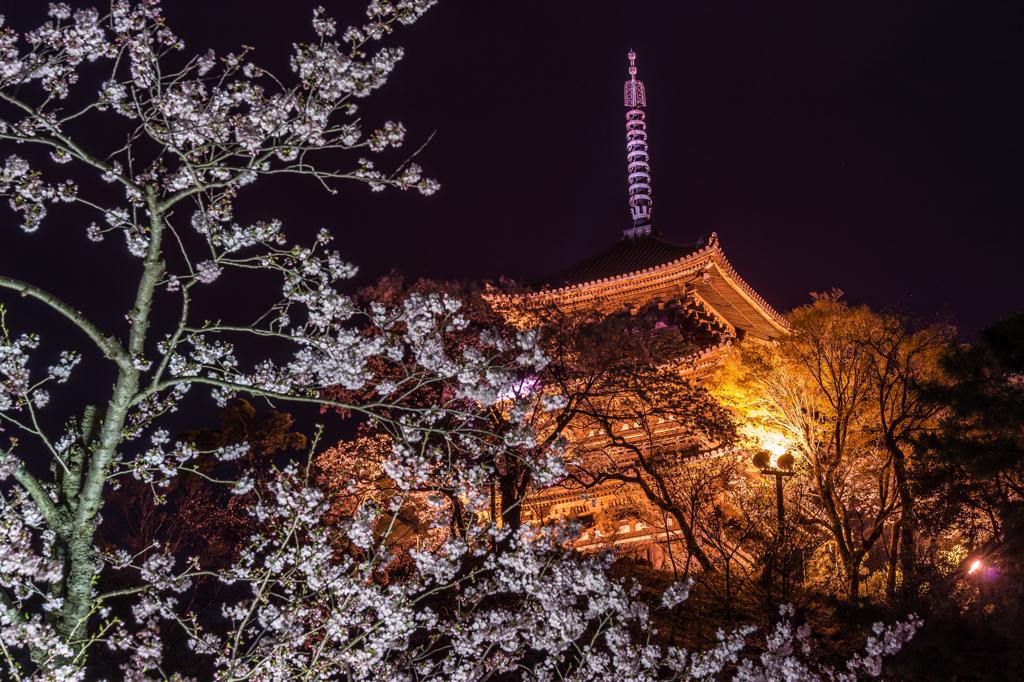 三渓園 桜ライトアップと塔