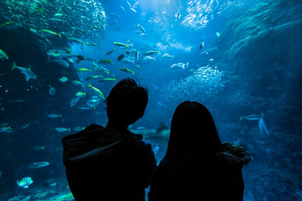 新江ノ島水族館のカップル