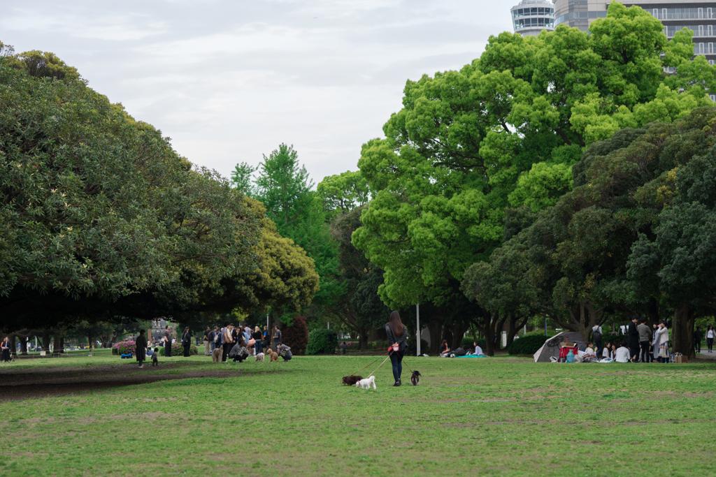 山下公園 新緑
