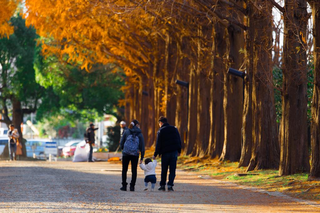 家族で歩く散歩道