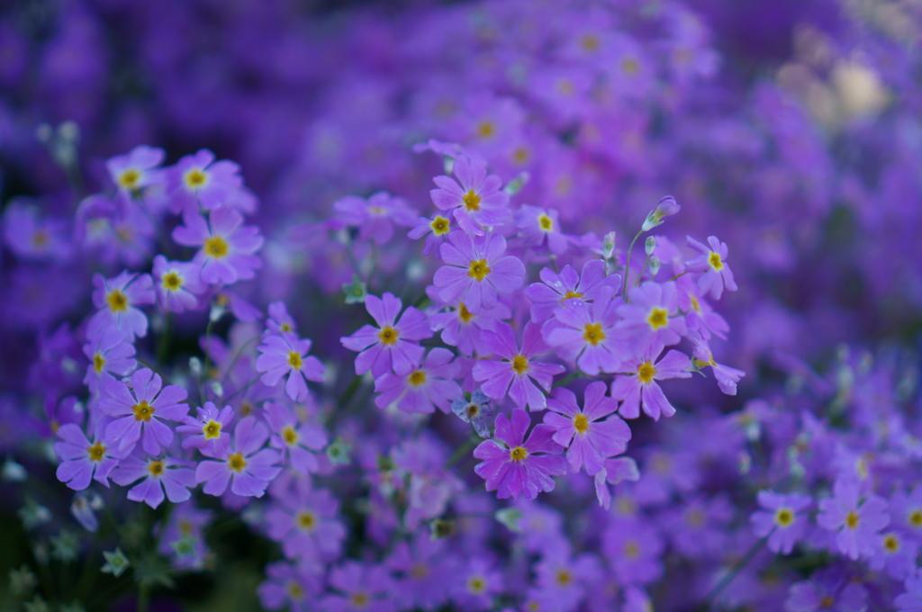 小花の群生