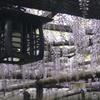 18-300mm F3.5-6.3 DC MACRO OS HSM [キヤノン用]で撮影した写真