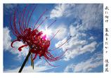 PowerShot SX50 HSで撮影した写真