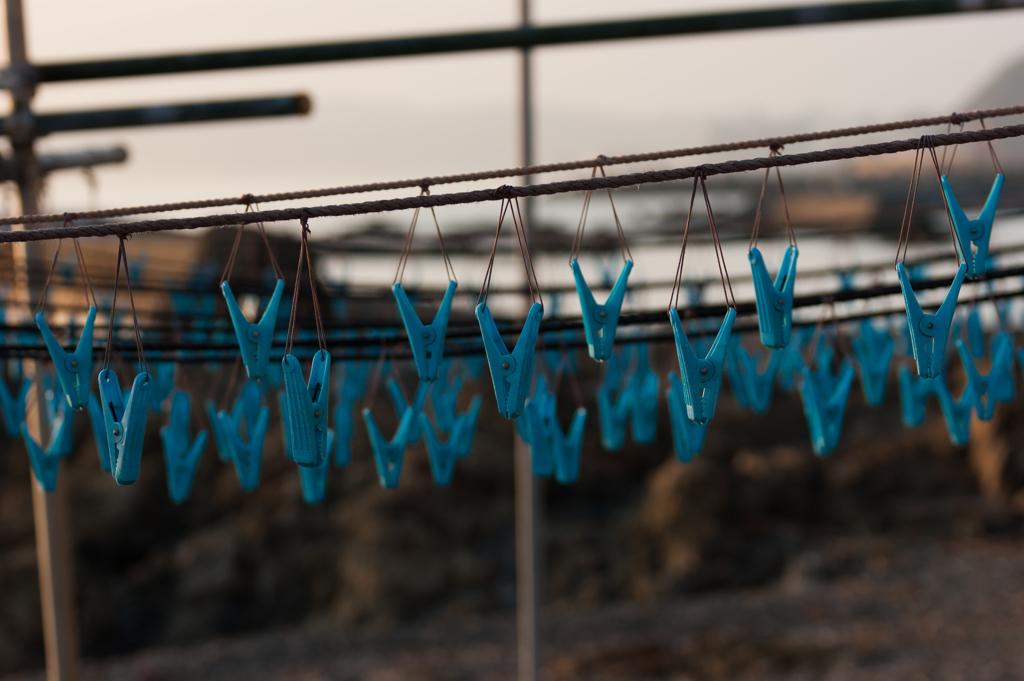 漁港の洗濯バサミ