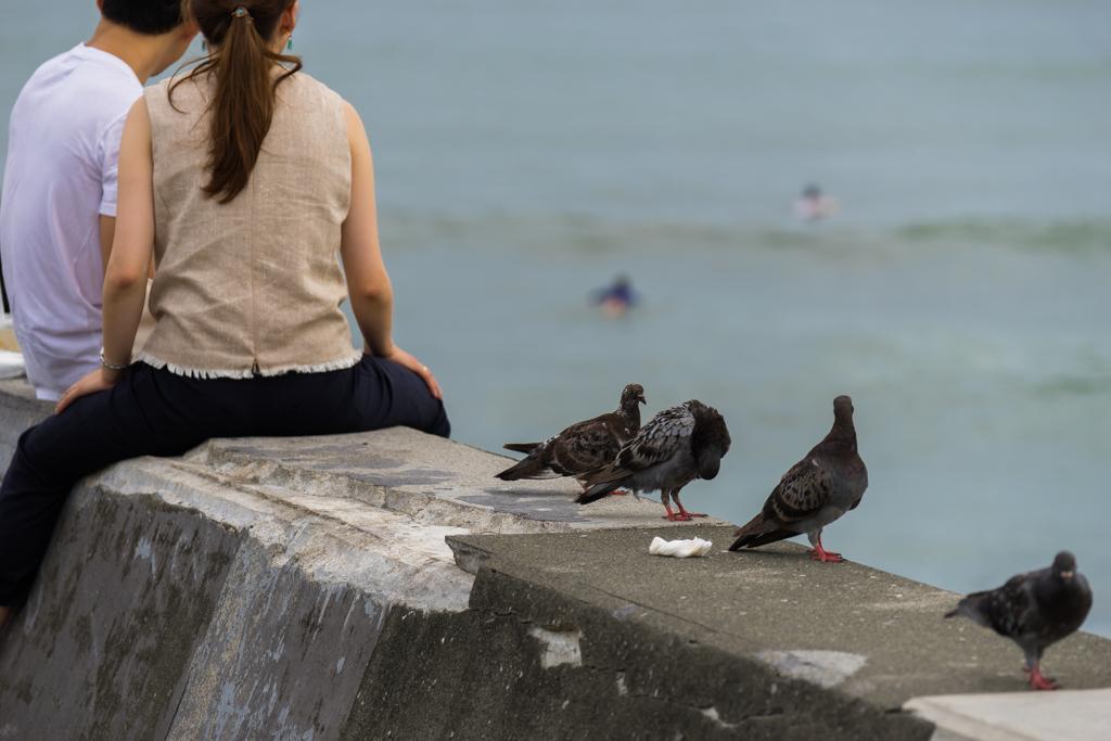七里ガ浜の鳩