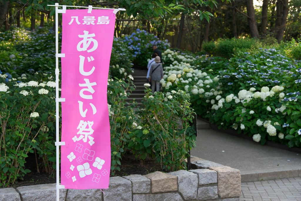 八景島あじさい祭り