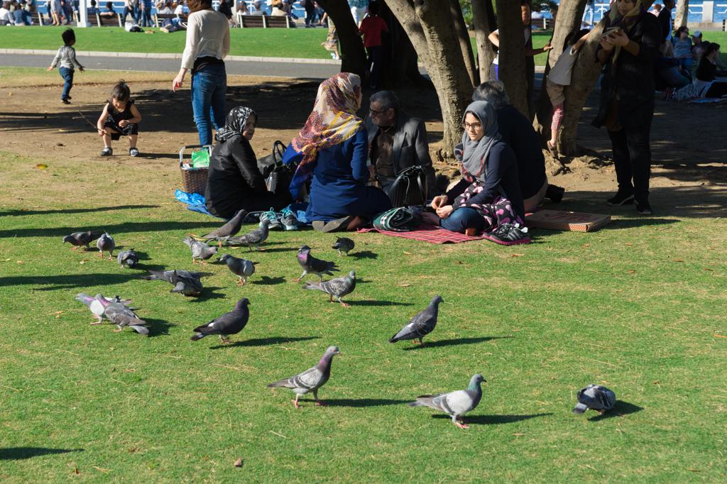 異国の人が鳩に餌やり