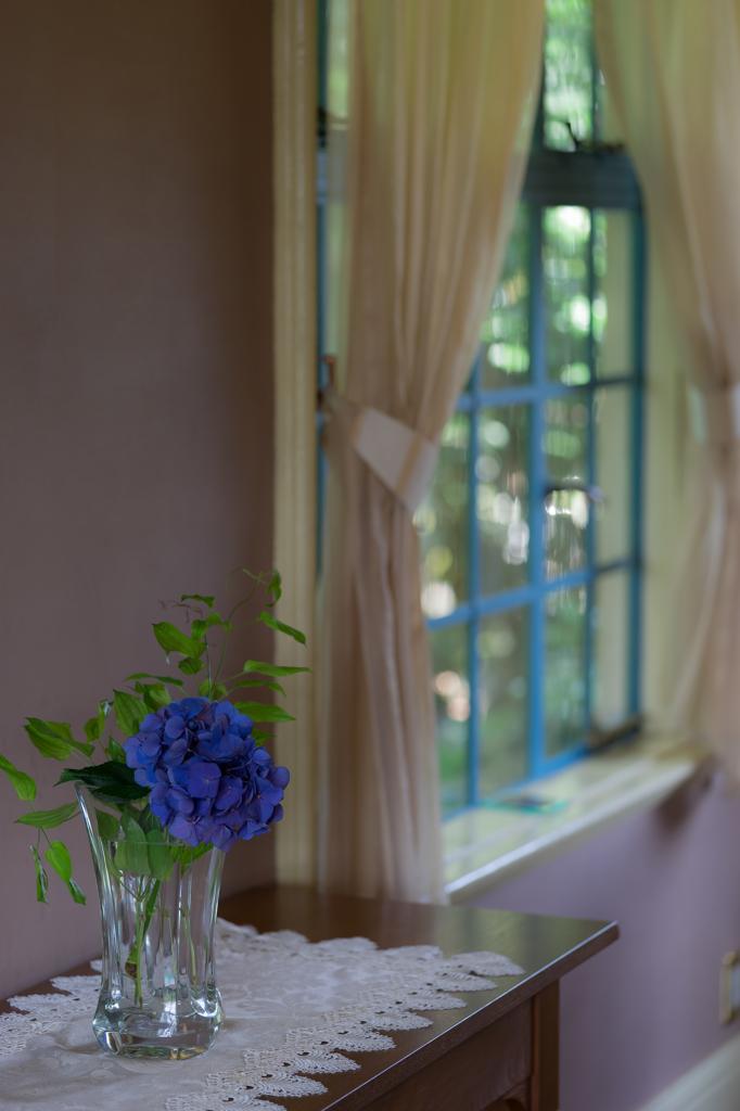 窓際の紫陽花
