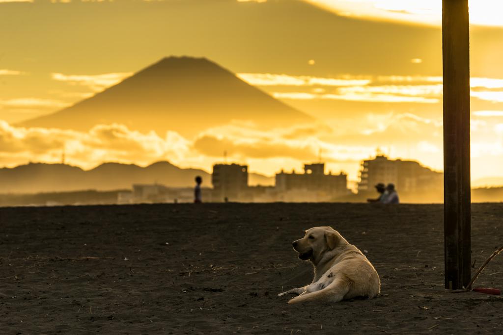 その犬は富士山と一緒にお留守番だった・・・