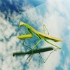 Xperia Z5 SoftBankで撮影した写真