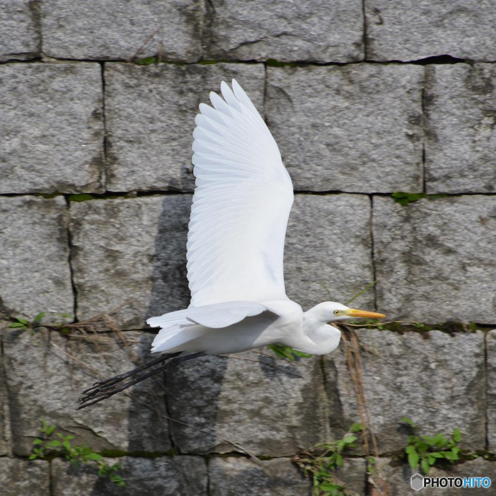 非常に敏感な鳥