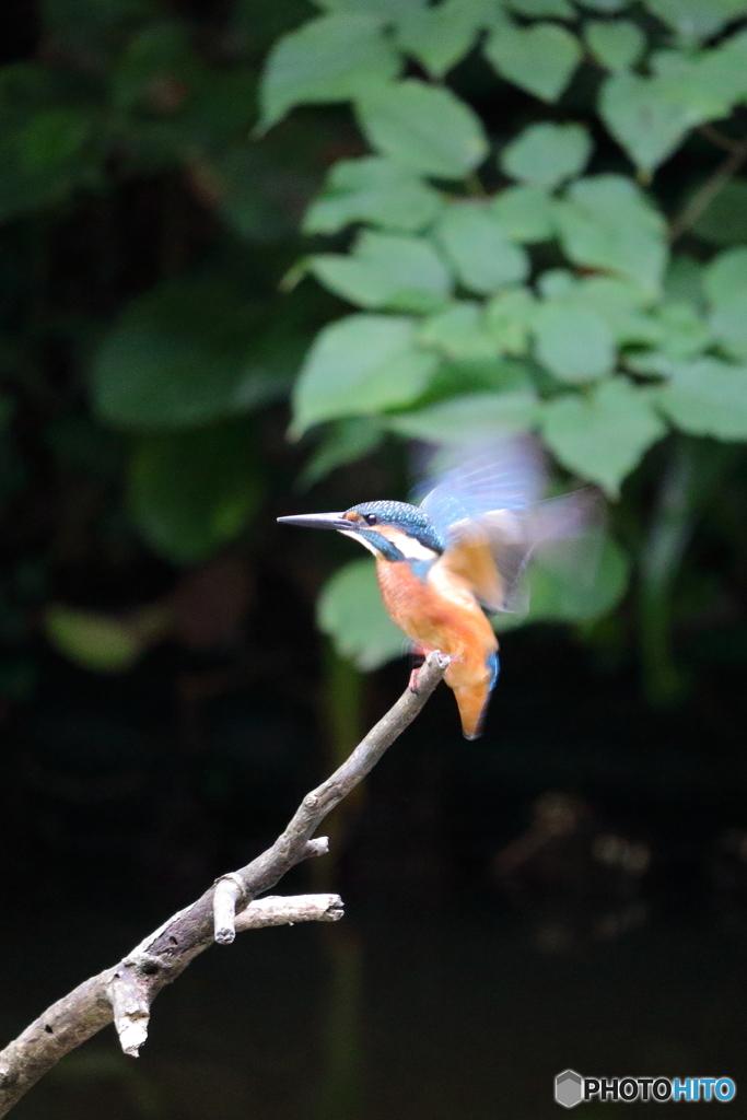 羽ばたきパフォーマンス