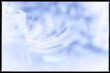 1 NIKKOR 18.5mm f/1.8 [シルバー]で撮影した写真