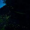 フォクトレンダー NOKTON 10.5mm F0.95で撮影した写真
