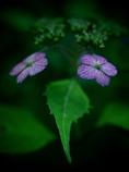 ズイコーデジタル 35mm F3.5 Macroで撮影した写真