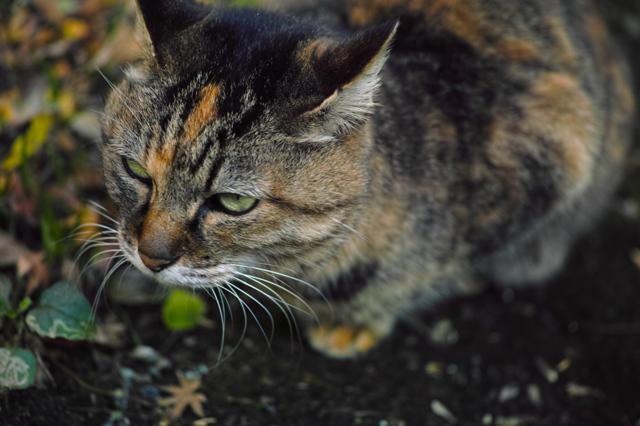妙本寺の猫ちゃん♪