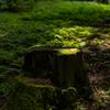 AF-S NIKKOR 50mm f/1.8Gで撮影した写真