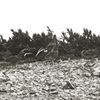 OLYMPUS STYLUS TG-2 Toughで撮影した写真