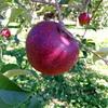 VAIO Phone A VPA0511S SIMフリーで撮影した写真