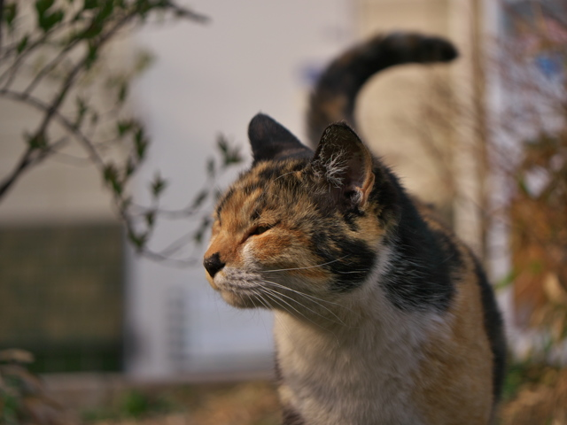P1090130 猫が西向きゃ尾は東