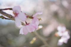 春の色その1