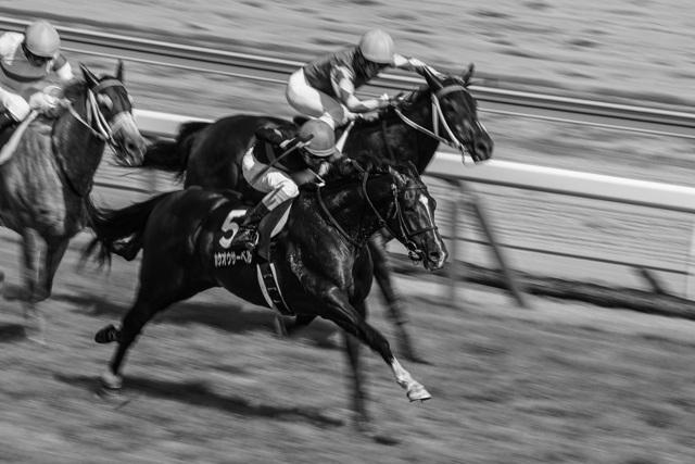 人と写真をつなぐ場所                        TMURO                ファン登録        駿馬達の日々コメント0件同じタグが設定されたTMUROさんの作品最近お気に入り登録したユーザータグ撮影情報EXIFデータ撮影地